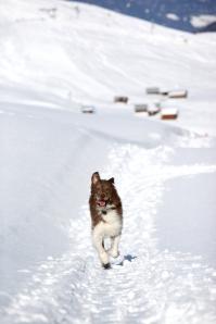 Cubbie... dog or wolf?